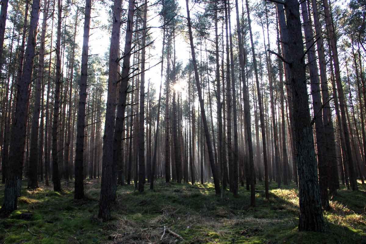 forest horizon